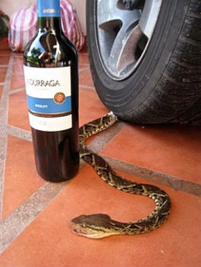 Cabernet Sauvignon – The life it saves could be yourown!